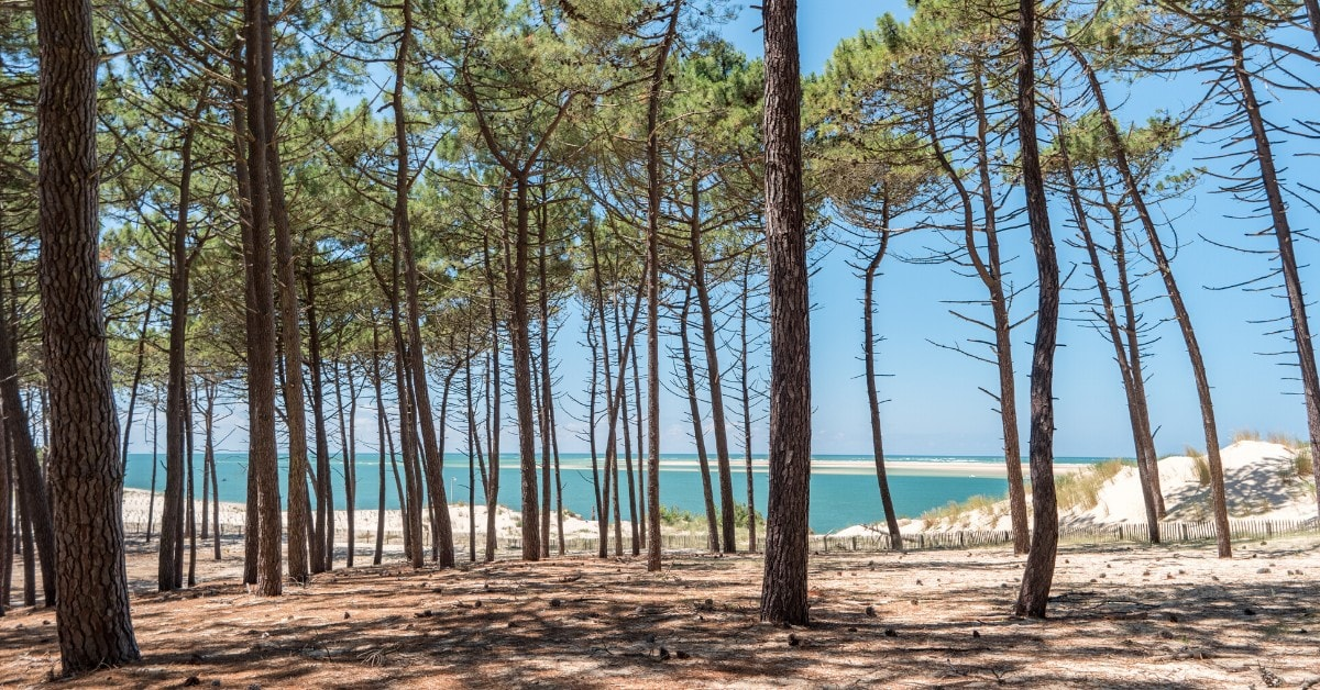 BOOTCAMP-sandra-fm-coaching-accompagnement-arcachon